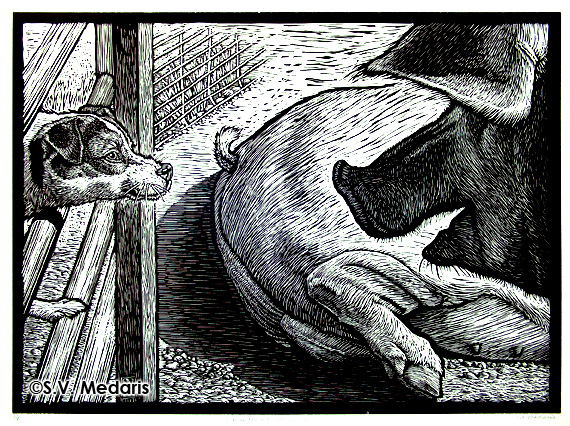 black and white woodcut of terrier (on left) and hog (on right) facing off