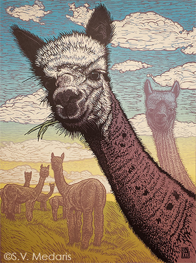 full-color reduction linocut features head and neck of bicolor alpaca. More alpacas in distance, bright blue sky with puffy clouds