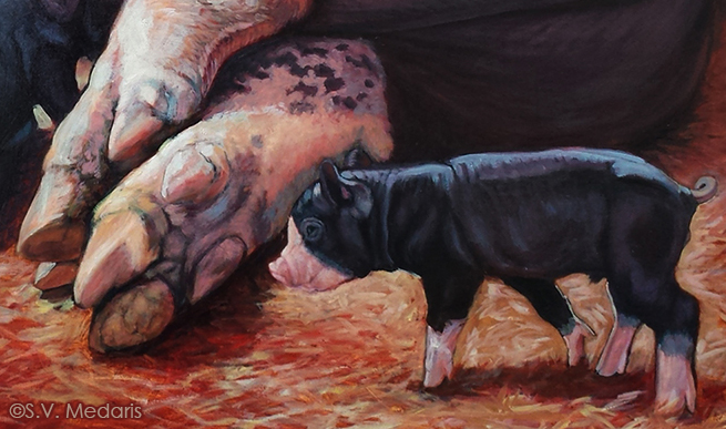 oil painting by S.V. Medaris of Berkshire sow and baby, closeup of sow's feet