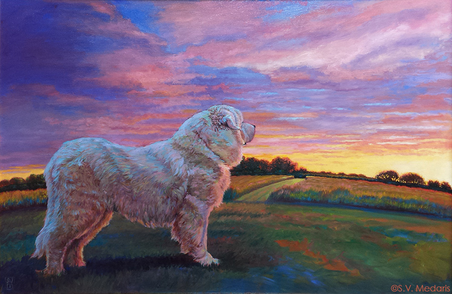 Great Pyrenees stands on hill looking to the west and the setting sun