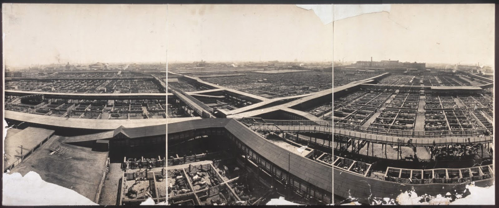 birds eye view of Chicago Union Stockyard, 1903