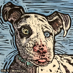 linocut of stunned, confused looking Great Dane Harlequin puppy